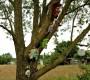 De familieboom met maskers